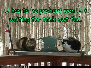 U has to be pashunt wen U R waiting for taek-owt fud.