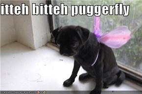 itteh bitteh puggerfly