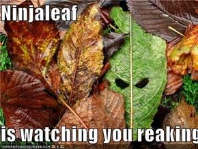 Ninjaleaf  is watching you reaking