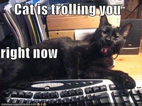 Cat is trolling you right now