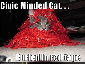 Civic Minded Cat. . .  Buried in red tape