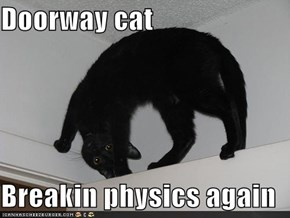 Doorway cat  Breakin physics again