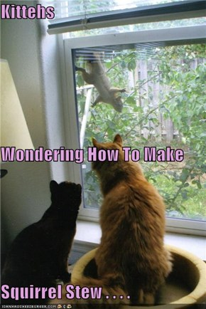 Kittehs Wondering How To Make Squirrel Stew . . . .