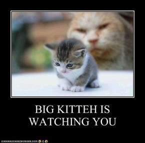 BIG KITTEH IS WATCHING YOU