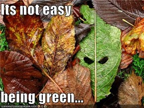 Its not easy  being green...