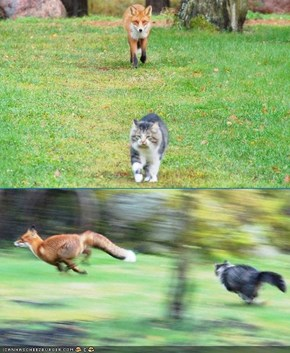 Storee Time: Teh Fox and teh Kitteh