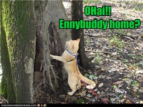OHai!!   Ennybuddy home?