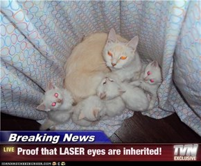 Breaking News - Proof that LASER eyes are inherited!