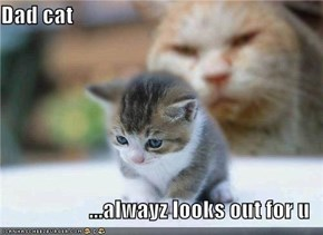 Dad cat  ...alwayz looks out for u
