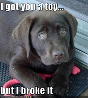 I got you a toy...  but I broke it