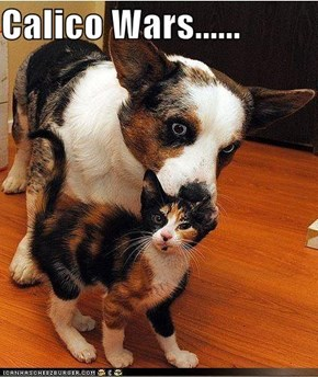 Calico Wars......