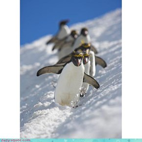 Acting Like Animals: The Antarctic Olympic Ski Team