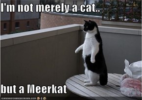 I'm not merely a cat..  but a Meerkat