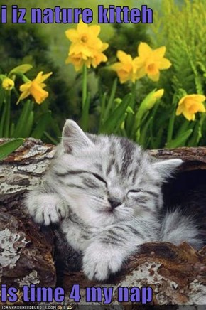 i iz nature kitteh  is time 4 my nap