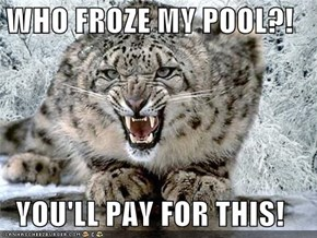 WHO FROZE MY POOL?!  YOU'LL PAY FOR THIS!