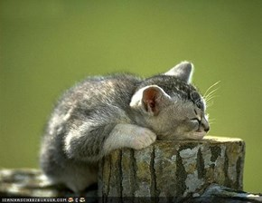 Cyoot Kitteh of teh Day: Nature Nap