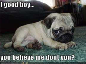 I good boy...  you believe me dont you?