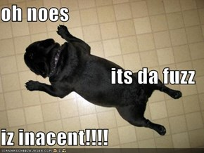 oh noes its da fuzz iz inacent!!!!