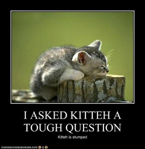 I ASKED KITTEH A TOUGH QUESTION