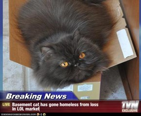 Breaking News - Basement cat has gone homeless from loss  in LOL market