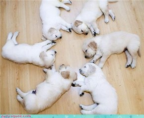 Puppy circles, a natural mystery