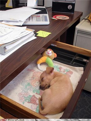 Never Feel Alone At Your Desk Again!