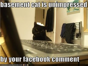 basement cat is unimpressed  by your facebook comment