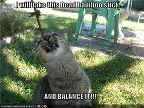 I will take this Dead bamboo stick...  AND BALANCE IT!!!