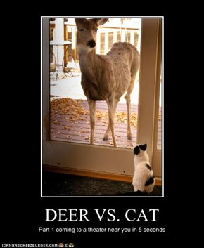 DEER VS. CAT
