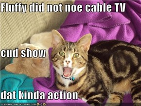 Fluffy did not noe cable TV cud show dat kinda action