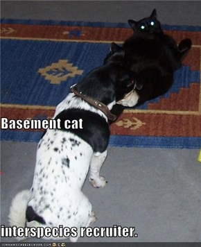 Basement cat interspecies recruiter.