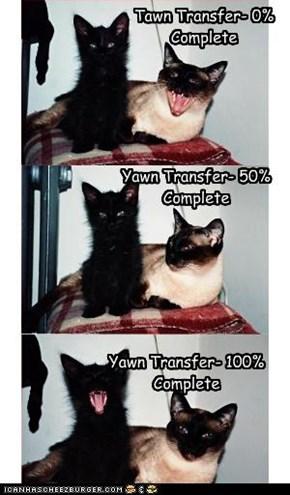 Transfering Yawn