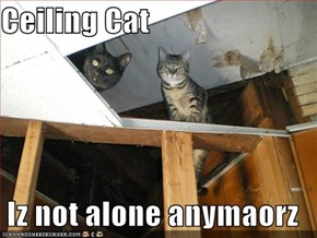 Ceiling Cat  Iz not alone anymaorz