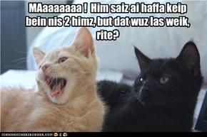 nawt dis weik, black kitteh