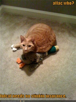 aflac who?  lolcat needs no stinkin insurance.