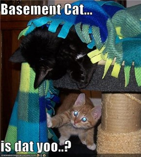 Basement Cat...  is dat yoo..?