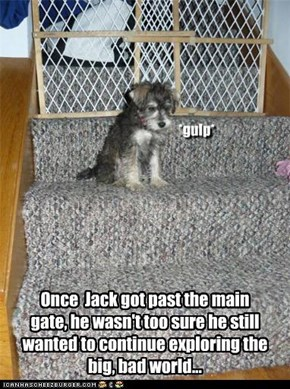 Once  Jack got past the main gate, he wasn't too sure he still wanted to continue exploring the big, bad world...