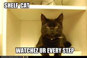 SHELF  CAT