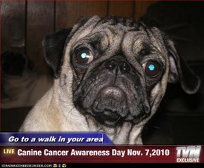 Go to a walk in your area - Canine Cancer Awareness Day Nov. 7,2010