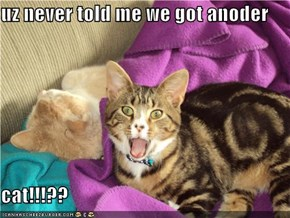 uz never told me we got anoder  cat!!!??