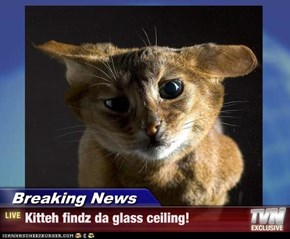 Breaking News - Kitteh findz da glass ceiling!