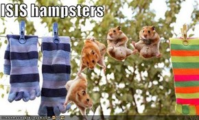 ISIS hampsters