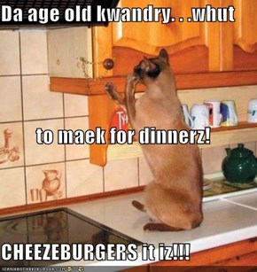 Da age old kwandry. . .whut to maek for dinnerz! CHEEZEBURGERS it iz!!!