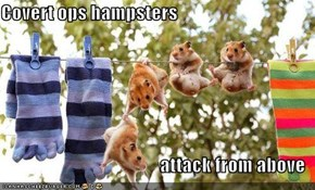 Covert ops hampsters   attack from above