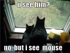 u see him?  no, but i see  mouse