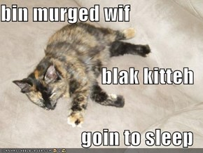 bin murged wif blak kitteh goin to sleep