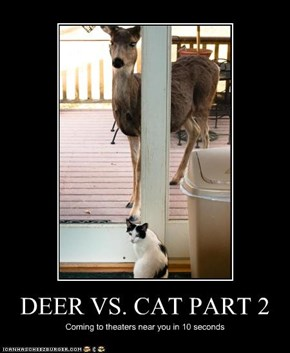 DEER VS. CAT PART 2