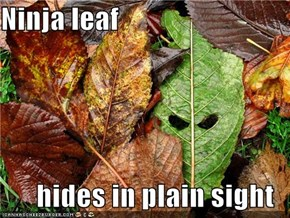 Ninja leaf  hides in plain sight