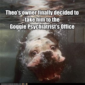 Theo's owner finally decided to take him to the  Goggie Psychiatrist's Office