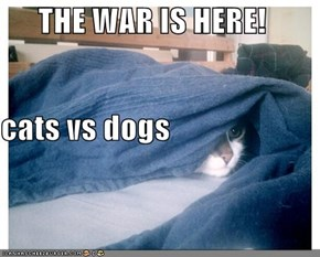 THE WAR IS HERE! cats vs dogs
